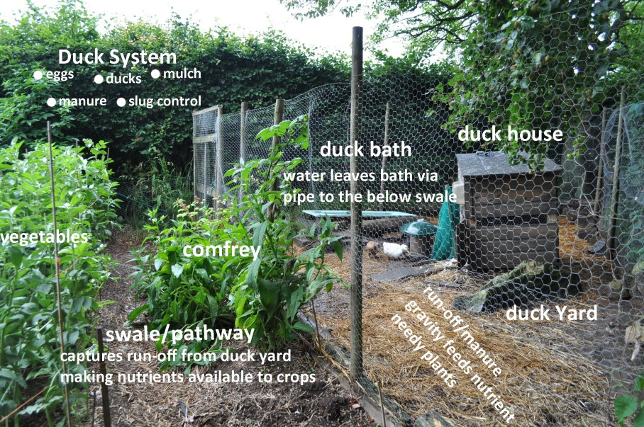 The many functions of the duck yard.