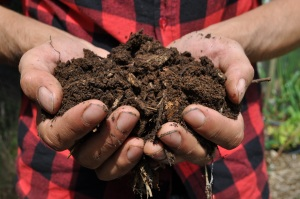 Mix of high Nitrogen duck manure and carbonous materials such as straw and wood chip makes excellent compost.